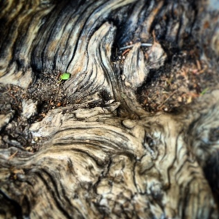 sweet pattern. A tiny little plant growing inside the dead wood. Poetry for the eyes, no?